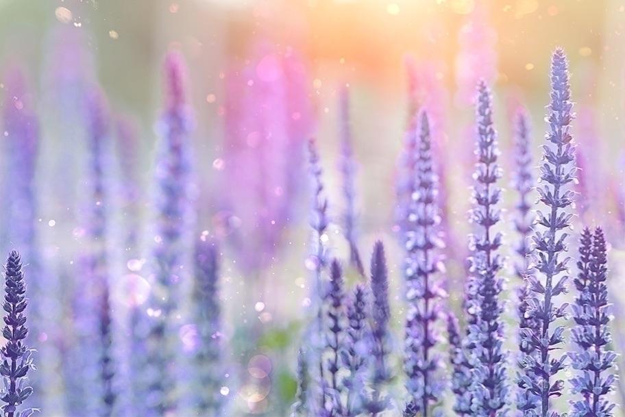Aromatherapy Lavender Flowers
