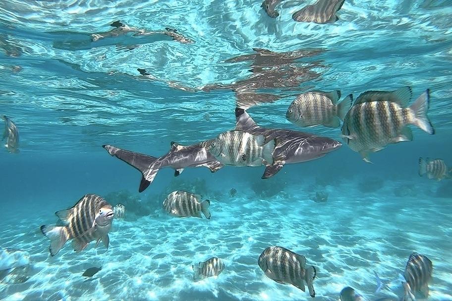 COLORSHOT Shark