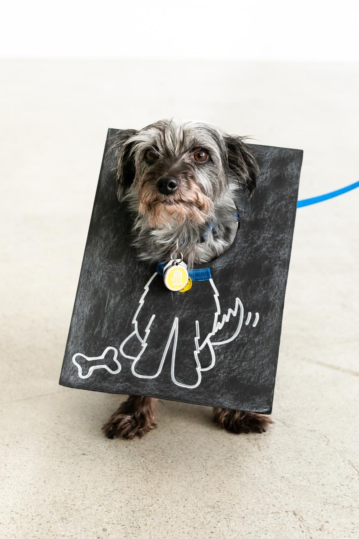 Sketch Board Dog Costume